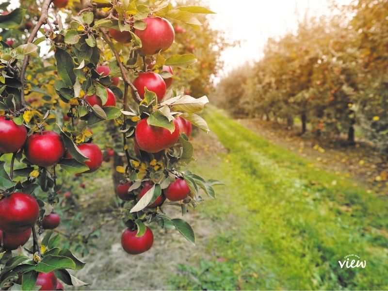 Visiting a cidery is one of the must do activities on our Vancouver Island Fall bucket list
