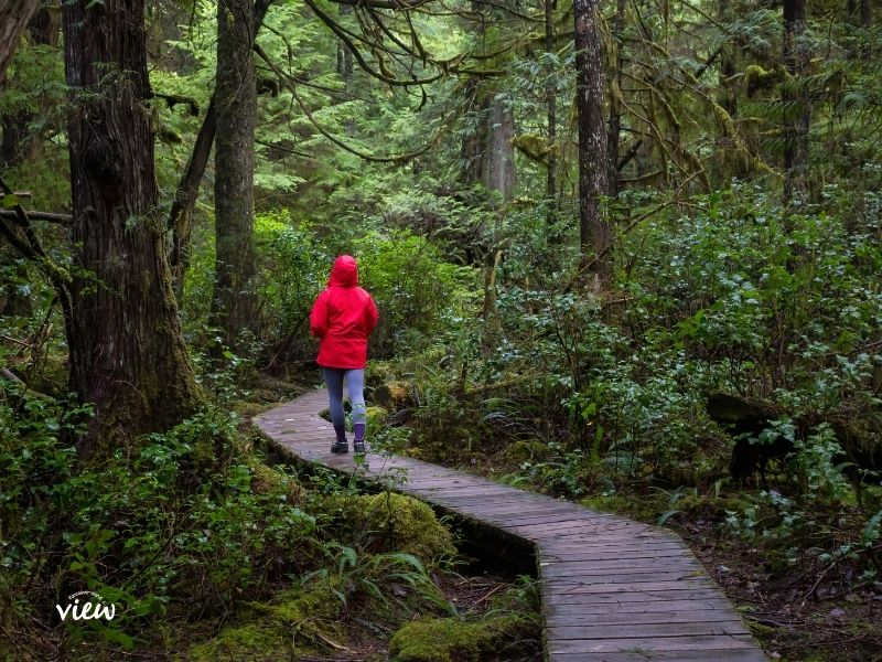 Explore miles of boardwalk trails while in the Pacific Rim and from your beachfront accommodation in Tofino. Vancouver Island View