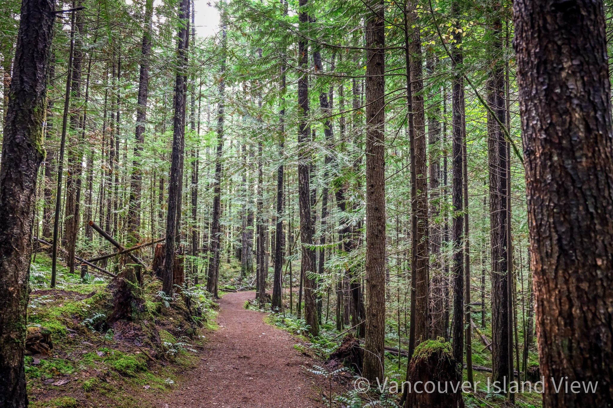 A wooded trail near Cumberland. Vancouver Island View
