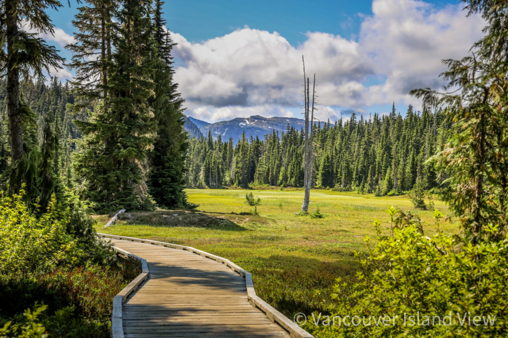 The beautiful Paradise Meadows in Strathcona Park. Vancouver Island View